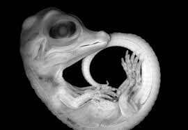 Embryo picture claims top spot in scientific images competition ...