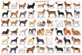 dog breeds alphabetical. Interesting Breeds Dog Breeds Alphabetical Inside O