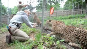 Training at Omaha's Henry Doorly Zoo - YouTube