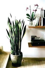 Image Flowering Plants Best Office Plants No Sunlight Houseplants Indoor Direct For That Tolerate Sun Sousmonarbrecom Best Office Plants No Sunlight Houseplants Indoor Direct For That