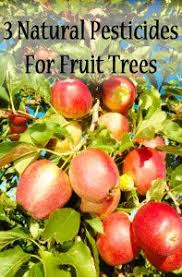 Best Time For Spraying Trees U2013 When To Spray Fruit TreesHomemade Spray For Fruit Trees