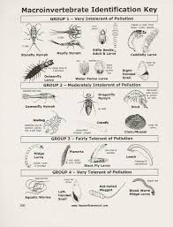 Invertebrate Identification Chart Project Nature Homeschool Explorations