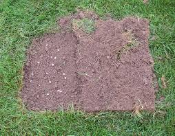 Turf Disease Managing White Grubs In Turfgrass