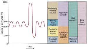 Lung Capacity Chart By Age Lung Volumes And Capacities Respiratory Medbullets Step 1