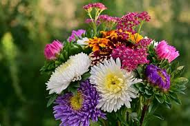 Flower Meanings Symbolism Of Flowers Herbs And Trees