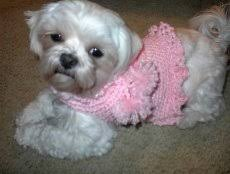 Free Crochet Dog Sweater Patterns Awesome GIGET'S PINK RUFFLED Dog SWEATER Free Crochet Pattern Free Crochet