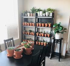 Succulent Grow Light Setup Finally Got My Shelves And Grow Light Setup Done Succulents