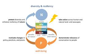 rising to the challenge of biodiversity conservation in a human  a framework for planning durable conservation outcomes the center box represents the