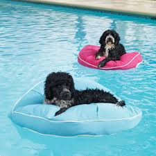 blue and pink cool pool floats pet pools