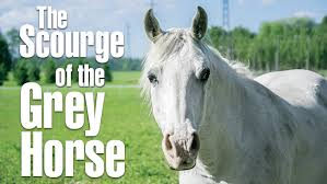 Grey Horses And The Scourge Equine Melanoma And Treatment