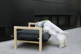 Modern Elevated Dog Bed from HAT Design Dog Milk