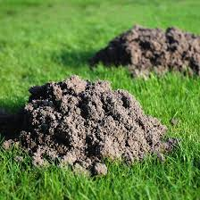 image of pocket gophers trees and garden