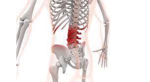 心に強く訴える腰痛 イラスト フリー素材 - 美しい花の画像