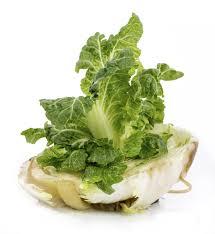 Kitchen Scrap Gardening Can I Regrow Cabbage In Water How To Grow Cabbage From Kitchen Scraps