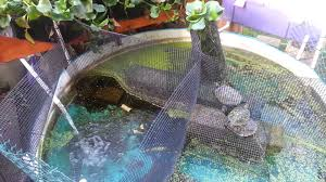 Self Cleaning Fish Tank Garden How Cheap Inexpensive Aquaponic Self Sustaining Planted Turtle