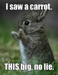 squee! adorable memes] on Pinterest | Thug Life, Cute Bunny and ... via Relatably.com