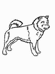 Hund Shiba Inu Ausmalbild Malvorlage Hunde