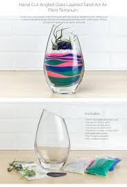 Air Plant Terrarium Layered Sand Art Air Plant Terrarium Currently Unavailable