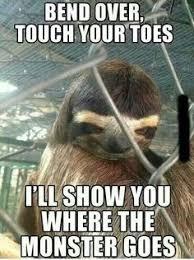 Sloth on Pinterest | Sloth Memes, Sloths and Funny Sloth via Relatably.com