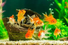 fish tank wallpapers. Beautiful Tank Aquarium Wallpapers 10101 Screenshot 17 Intended Fish Tank S
