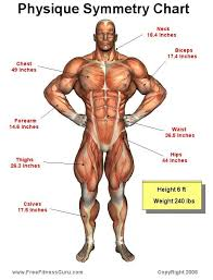 Pin On Muscle Anatomy