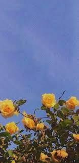 Yellow Aesthetic, aesthetic, blue ...