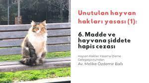 Unutulan hayvan hakları yasası (1): 6. madde ve hayvana şiddete hapis  cezası - Medyascope