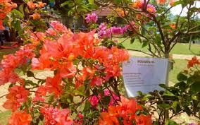 Dengan membayar biaya tiket masuk tersebut, wisatawan bebas menikmati setiap sudut di area taman yang menarik ini. Taman Herbal Insani Depok Tiket Aktivitas Mei 2021 Travelspromo