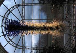 chihuly s missouri botanical garden blue chandelier