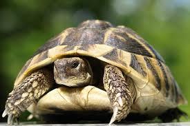 """Résultat de recherche d'images pour """"image tortue"""""""