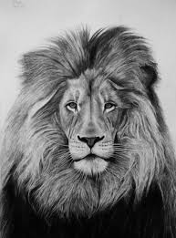 realistic lion face drawing. Perfect Drawing A3 Lion Intended Realistic Face Drawing B