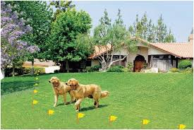 if you have a kennel dog fences are an important fixture of your premise it helps your dogs to restrain within a fixed area the setting wireless dog