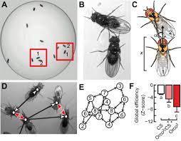 the neurogenetics of group behavior in drosophila melanogaster figure