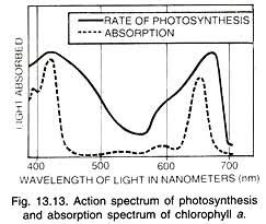 Action Spectrum Types Of Photosynthetic Pigments 2 Types