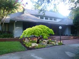 purple ghost japanese maple - Google Search. Landscaping ...