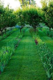 Top Plants For Underplanting  HGTVUnderplanting Fruit Trees
