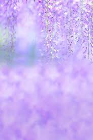 Purple Flowers Backgrounds Amazon Com A Monamour Light Purple Flower Wedding Photo