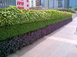 Small Picture Vertical Gardens Manufacturers Suppliers Wholesalers