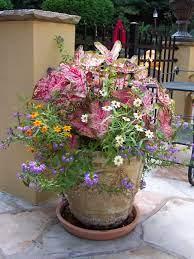 container flower garden garden