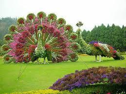 Flower Peacocks Landscape