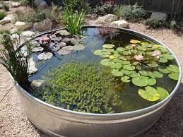 vickie hallmark stock tank pond update