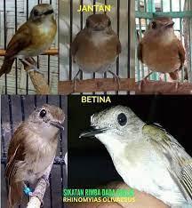 Bulu burung merak jantan lebih indah dibandingkan dengan burung merak betina. 500 Gambar Burung Flamboyan Jantan Hd Paling Keren Infobaru