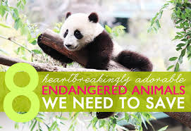heartbreakingly adorable endangered animals green  environment