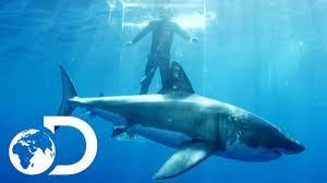 shark. Wonderful Shark Gigantic Sharks Break Into Ghost Cage  Island Of The Mega Shark Intended YouTube