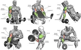 Biceps Exercise Chart Blast Your Biceps Workout Chart Dees Fitness