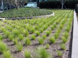Small Picture Exterior Design Interesting Mexican Feather Grass With Gravel For