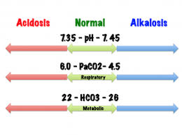 Arterial Blood Gases Physiopedia