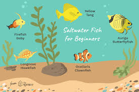 Saltwater Fish Compatibility Chart Awesome Beginner Fish For A Saltwater Aquarium
