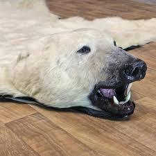 bear head rug polar bear rugs with head furniture for polar bear rug for bear head rug the definitive bear taxidermy