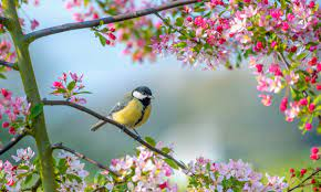 Birds, buds and bright days: how spring can make us healthier and happier |  Health & wellbeing | The Guardian
